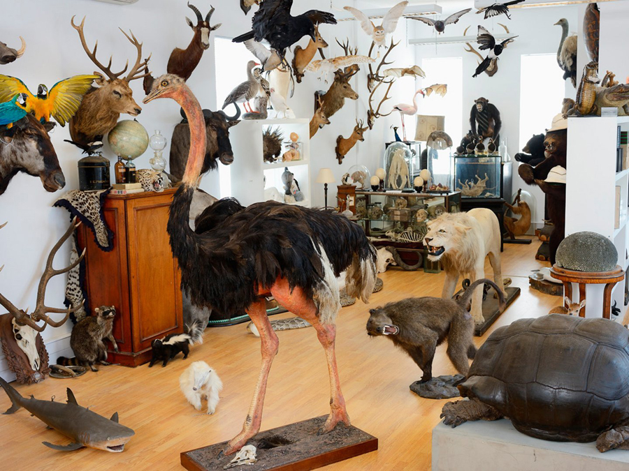 AlexisTurner_Taxidermie_06