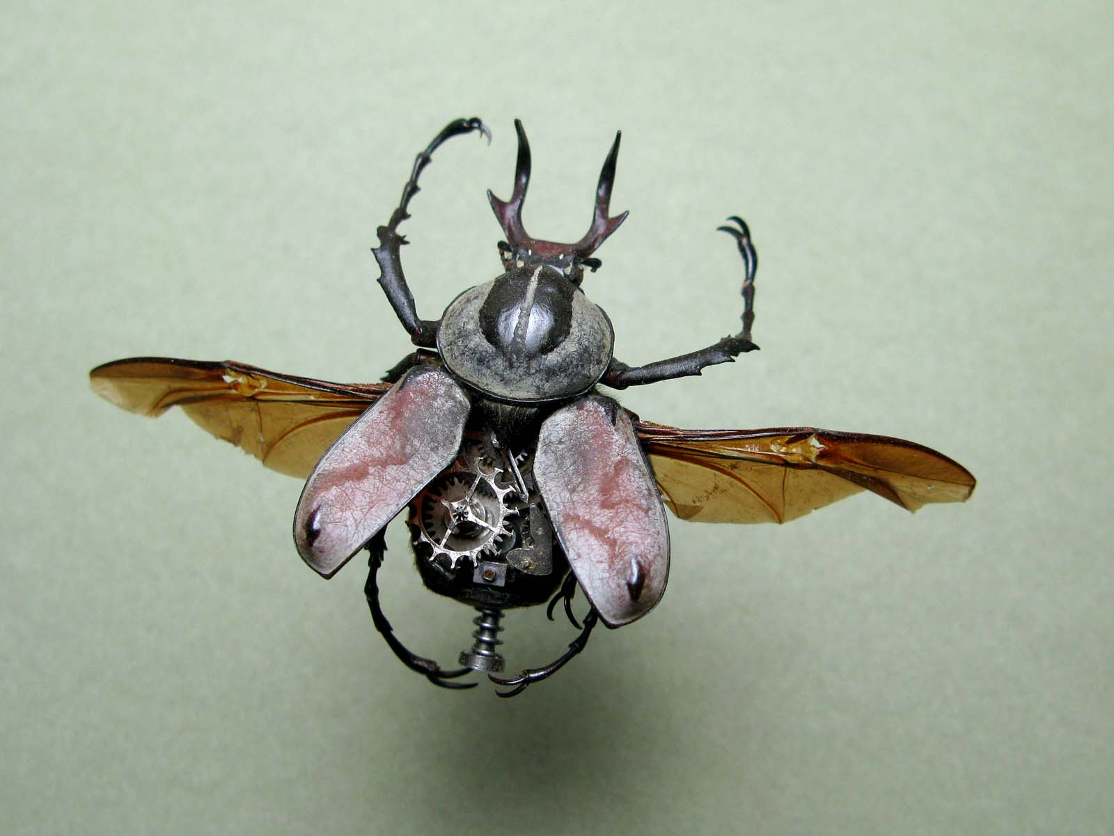 InsectLab_01